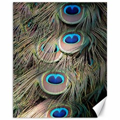 Colorful Peacock Feathers Background Canvas 11  X 14   by Simbadda
