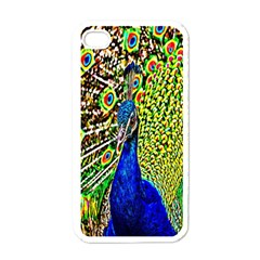 Graphic Painting Of A Peacock Apple Iphone 4 Case (white) by Simbadda