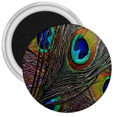 Peacock Feathers 3  Magnets by Simbadda