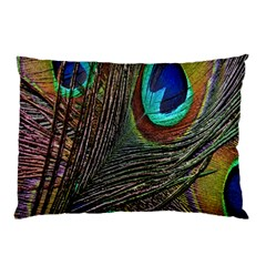 Peacock Feathers Pillow Case by Simbadda