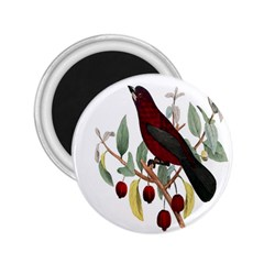 Bird On Branch Illustration 2 25  Magnets by Amaryn4rt