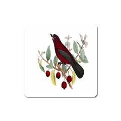 Bird On Branch Illustration Square Magnet by Amaryn4rt