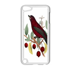 Bird On Branch Illustration Apple Ipod Touch 5 Case (white) by Amaryn4rt