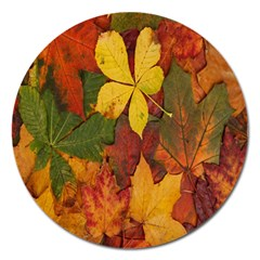 Colorful Autumn Leaves Leaf Background Magnet 5  (round) by Amaryn4rt