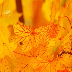 Bright Yellow Autumn Leaves Magic Photo Cubes by Amaryn4rt
