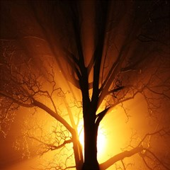 Rays Of Light Tree In Fog At Night Magic Photo Cubes