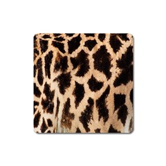 Yellow And Brown Spots On Giraffe Skin Texture Square Magnet by Amaryn4rt