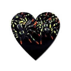 Colorful Spiders For Your Dark Halloween Projects Heart Magnet by Simbadda