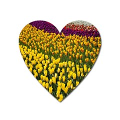 Colorful Tulips In Keukenhof Gardens Wallpaper Heart Magnet by Simbadda