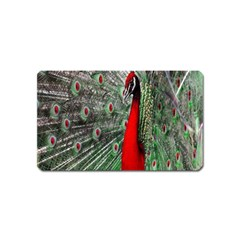 Red Peacock Magnet (name Card) by Simbadda