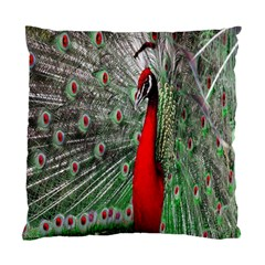 Red Peacock Standard Cushion Case (two Sides) by Simbadda