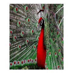 Red Peacock Shower Curtain 60  X 72  (medium)  by Simbadda