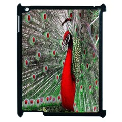 Red Peacock Apple Ipad 2 Case (black) by Simbadda