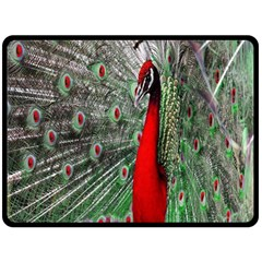 Red Peacock Double Sided Fleece Blanket (large)  by Simbadda