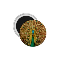 Peacock Bird Feathers 1 75  Magnets by Simbadda