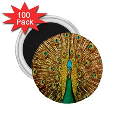 Peacock Bird Feathers 2 25  Magnets (100 Pack)  by Simbadda