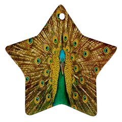 Peacock Bird Feathers Star Ornament (two Sides) by Simbadda