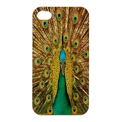Peacock Bird Feathers Apple Iphone 4/4s Premium Hardshell Case