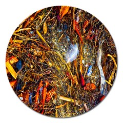 Abstract In Orange Sealife Background Abstract Of Ocean Beach Seaweed And Sand With A White Feather Magnet 5  (round) by Nexatart