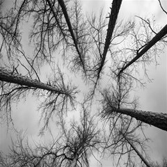 Trees Without Leaves Magic Photo Cubes by Nexatart
