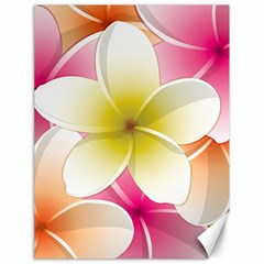 Frangipani Flower Floral White Pink Yellow Canvas 18  X 24   by Mariart