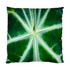 Green Leaf Macro Detail Standard Cushion Case (two Sides) by Nexatart
