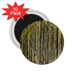 Bamboo Trees Background 2 25  Magnets (10 Pack)