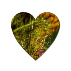 Dragonfly Dragonfly Wing Insect Heart Magnet by Nexatart