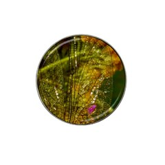 Dragonfly Dragonfly Wing Insect Hat Clip Ball Marker (4 Pack) by Nexatart