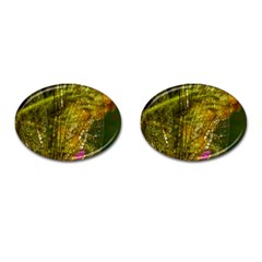 Dragonfly Dragonfly Wing Insect Cufflinks (oval) by Nexatart