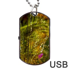 Dragonfly Dragonfly Wing Insect Dog Tag Usb Flash (one Side) by Nexatart