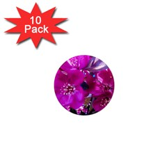 Pretty In Fuchsia 1  Mini Magnet (10 Pack)  by dawnsiegler