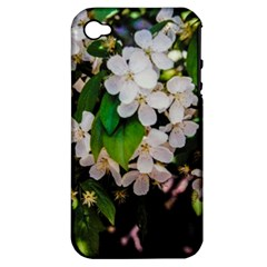 Tree Blossoms Apple Iphone 4/4s Hardshell Case (pc+silicone) by dawnsiegler
