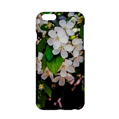 Tree Blossoms Apple Iphone 6/6s Hardshell Case by dawnsiegler