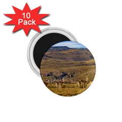 Group Of Vicunas At Patagonian Landscape, Argentina 1 75  Magnets (10 Pack)  by dflcprints