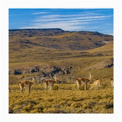 Group Of Vicunas At Patagonian Landscape, Argentina Medium Glasses Cloth by dflcprints