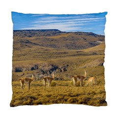Group Of Vicunas At Patagonian Landscape, Argentina Standard Cushion Case (one Side) by dflcprints