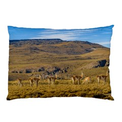 Group Of Vicunas At Patagonian Landscape, Argentina Pillow Case by dflcprints