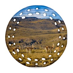 Group Of Vicunas At Patagonian Landscape, Argentina Ornament (round Filigree) by dflcprints