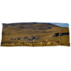 Group Of Vicunas At Patagonian Landscape, Argentina Body Pillow Case (dakimakura) by dflcprints