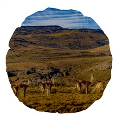 Group Of Vicunas At Patagonian Landscape, Argentina Large 18  Premium Round Cushions by dflcprints