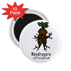 Mandrake Plant 2 25  Magnets (10 Pack)