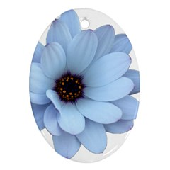Daisy Flower Floral Plant Summer Ornament (oval) by Nexatart