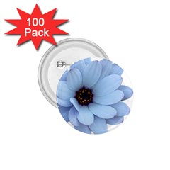 Daisy Flower Floral Plant Summer 1 75  Buttons (100 Pack)