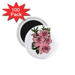 Orchid 1 75  Magnets (100 Pack)