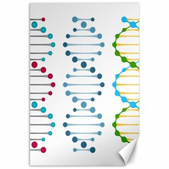 Genetic Dna Blood Flow Cells Canvas 24  X 36  by Mariart
