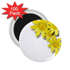 Flowers Spring Yellow Spring Onion 2 25  Magnets (100 Pack)  by Nexatart