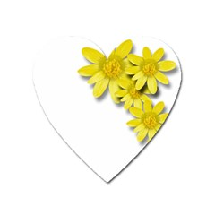 Flowers Spring Yellow Spring Onion Heart Magnet by Nexatart