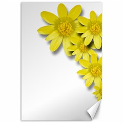Flowers Spring Yellow Spring Onion Canvas 12  X 18