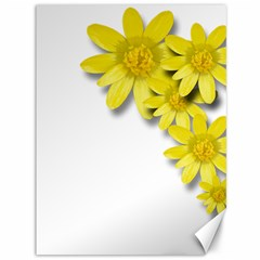 Flowers Spring Yellow Spring Onion Canvas 36  X 48